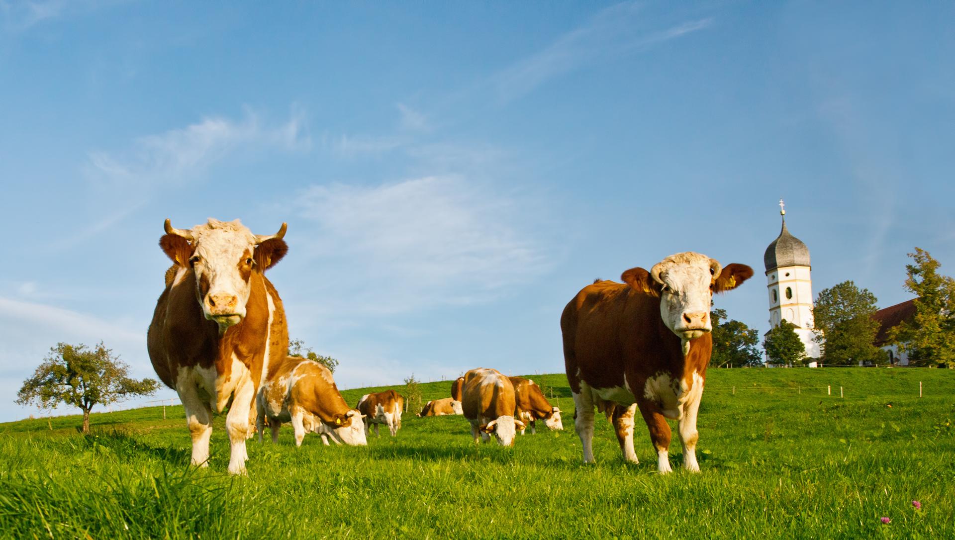 Billet sortir l agriculture du salon pour la ramener vers for Billet salon agriculture